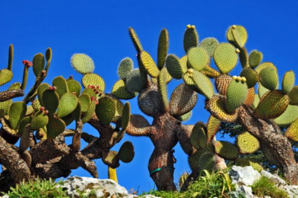 Botanische tuin van Calella de Palafrugell